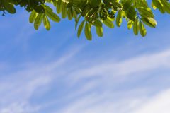 Tree branch blue sky Royalty Free Stock Photos