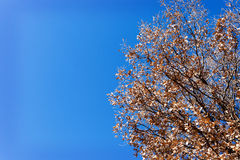 Tree branch and blue sky Stock Photos
