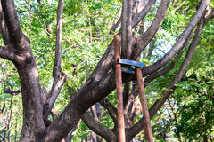 Tree branch bracing with steel in garden.  Royalty Free Stock Images
