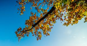 Tree branch covered with autumn trees and blue sky. Tree branch covered with autumn trees, fall background stock images