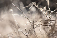 Tree branch covered with hoarfrost Royalty Free Stock Photos