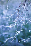 tree branch covered with ice Stock Images