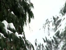 Tree branch covered with snow. Tree branch in a city covered with snow during the hard winter stock video