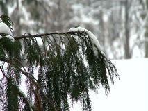 Tree branch covered with snow. Tree branch in a city covered with snow during the hard winter stock video footage