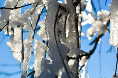 Tree branch covered by snow Stock Photos