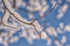 Tree branch covered with snow, winter photography Stock Images