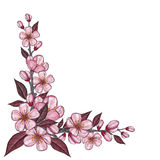 Tree branch drawing with pink cherry flower for corner decoration. Tree branch drawing with pink cherry flower and leaf for spring corner decoration, isolated on Stock Photos