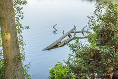 Tree Branch floating in a Delaware lake Royalty Free Stock Image