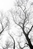 Tree  branch in fog forest Royalty Free Stock Photo