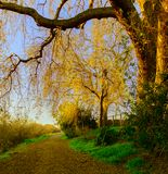 Tree branch framing a path with golden light royalty free stock image