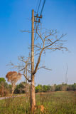 Tree branch in front of electrical transmission line. Royalty Free Stock Images