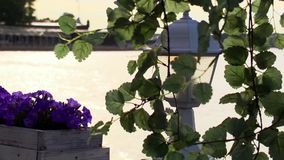 Tree branch in front of flashlight and flowerbed violet. Seafront on background. Tree branch flatters on a wind in front of flashlight and flowerbed violet stock footage