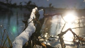 Tree branch frozen in the ice forest river nature sunlight landscape winter Royalty Free Stock Photo