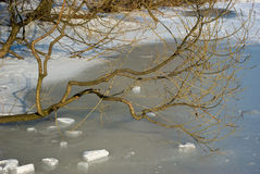 Tree branch on frozen pond. In early spring Royalty Free Stock Photo