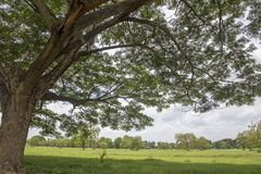 Tree with branch and green grass Royalty Free Stock Photos