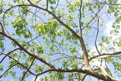 Tree branch and green leaves royalty free stock image