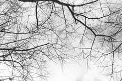 Tree branch grunge vintage texture Stock Photography