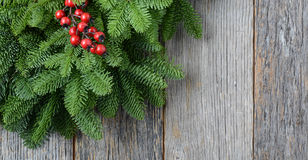 Tree branch with Holly Berr Stock Image