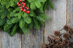 Tree branch with Holly Berry Royalty Free Stock Photo