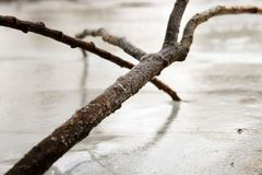 Tree branch in ice Royalty Free Stock Image