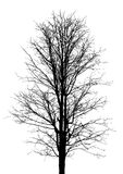 Tree branch isolated vector Stock Image