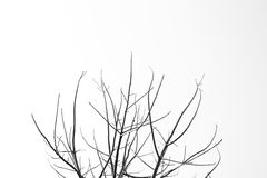 Tree branch. The tree branch isolated on white background Stock Images