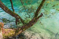 Tree branch and lake Royalty Free Stock Images