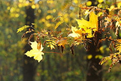 Tree branch and leaf fall in forest Royalty Free Stock Photos