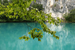 Tree branch with leaves on a background of blue water of a mountain lake Stock Image