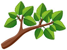 Tree branch with leaves. Illustration Stock Photo