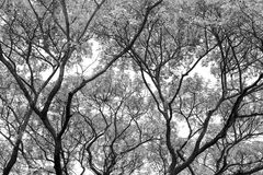 Tree branch and leaves silhouette against white background. Royalty Free Stock Photo