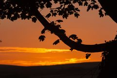 Tree Branch Silhouetted Against Sunset. A tree branch and leaves silhouetted against a red sky at sunset Royalty Free Stock Photography