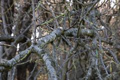 Tree branch without leaves and spider webs royalty free stock image