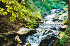 Tree branch with a mountain river on the background Royalty Free Stock Images
