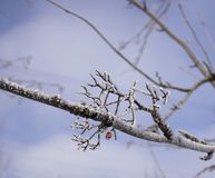 tree branch stock photography