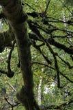 Tree, Branch, Nature, Vegetation royalty free stock image