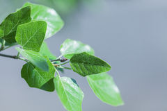Tree branch over blurred green leaves Stock Photo