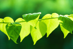 Tree branch over blurred green leaves background Stock Photos