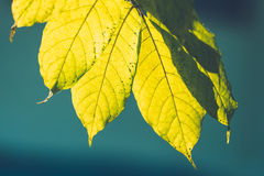 Tree branch over blurred green leaves background Royalty Free Stock Photos