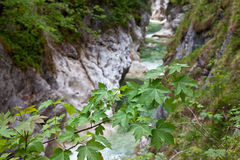 Tree branch over flowing water in a gorge Royalty Free Stock Photos