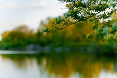 Tree branch over lake. Tree branch overhanging over lake in countryside scene Stock Photography