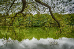 Tree branch over the water. The branch of a tree leaned over the water of the lake Royalty Free Stock Image