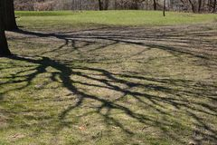 Tree branch patterns in High Park early spring. The shadows of the beech tree create a latticework on the grass in the spring sunshine Stock Images