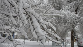 Tree branch people walk nature along the road in the snow in the city street snow winter outdoors. Tree branch people walk nature along road in the snow in the stock footage