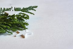 Tree, Branch, Pine Family, Fir Royalty Free Stock Image