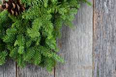 Tree branch with pinecone Stock Images