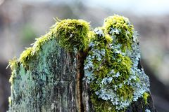 Tree, Branch, Plant, Moss Royalty Free Stock Images