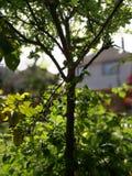 Tree, Branch, Plant, Vegetation