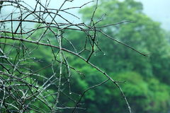 Tree branch with rain drops. Little rain on the branches of a tree in green background Royalty Free Stock Photo