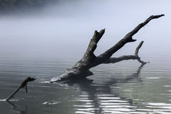 Tree branch in a river stream with gray mist Royalty Free Stock Images